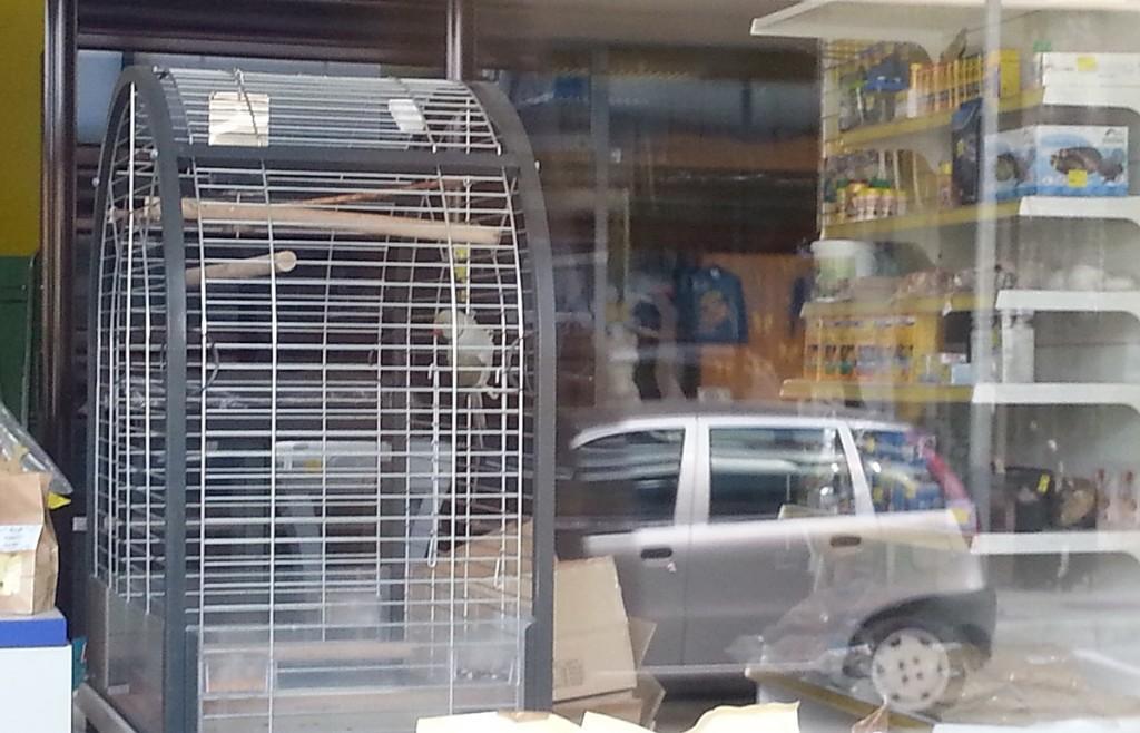 V zaprti trgovini Tukano v Trbovljah sameva tudi papagaj vrste aleksander.