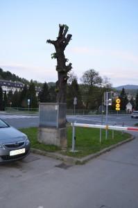 drevesa v bližini bivše pošte trbovlje
