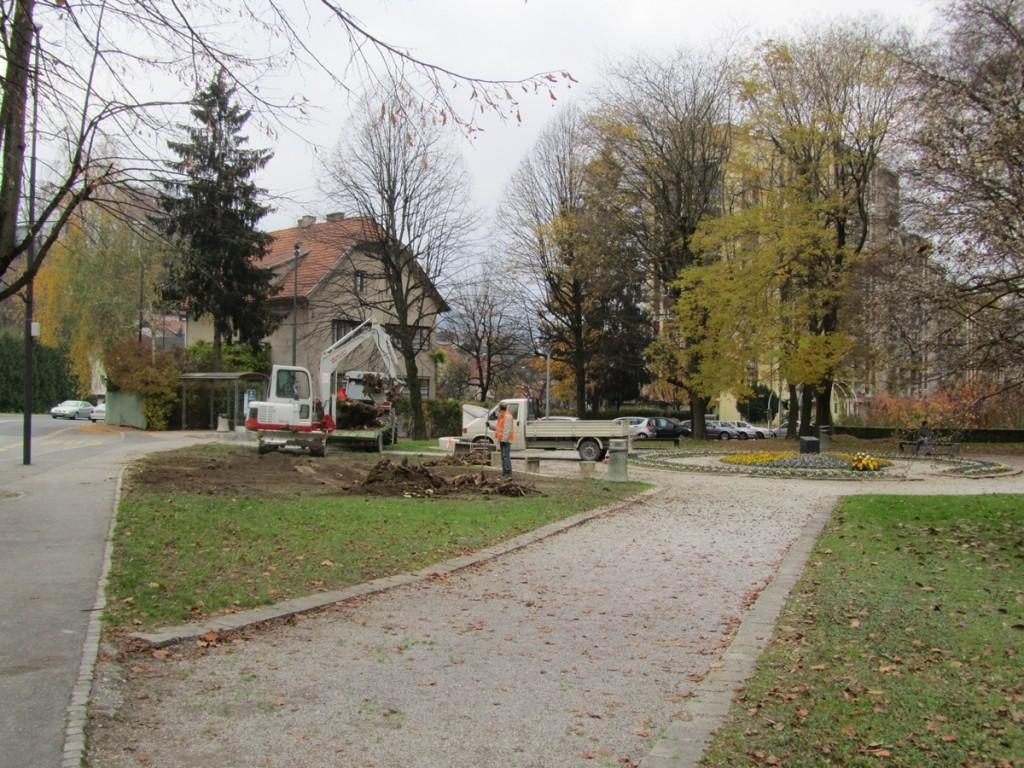 Obolelo bukev v parku pred občino so odstranili novembra lani