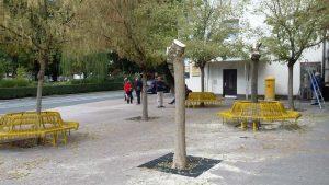 posek dreves tržnica2